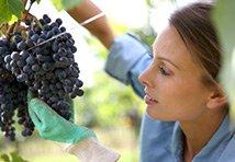 Les métiers et secteurs agricoles qui recrutent