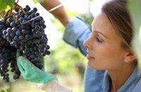 Les métiers de la vigne recrutent